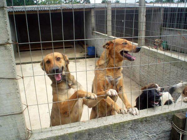 ONG do Cão